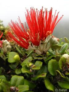 Plant Gallery Photo