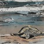 Nov. Honu by Julie Peterson